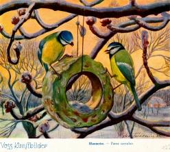"""Bild: Blaumeisen Kunstbild Bildlegende: Blaumeisen Voss-Kunstbild © noten-apitz.de Bildquelle: Sammelalbum für Voss-Kunstbilder """"Das Tierreich"""", 1932 Hamburger Margarine-Werke"""