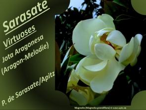 Sarasate Virtuoses Jota Aragonesa Bild: Magnolie (Magnolia grandiflora) Bildlegende: Bildquelle: Musikverlag Apitz