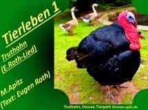 Tierleben 1 Truthahn (E. Roth-Lied) 5 Schwanensang – Eugen Roth-Lieder; Manfred Apitz (Text: Eugen Roth); Truthahn, Dessau Sparte: 20.+21. Jh. Konzert