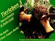 Tierleben 3 Hausschwein (E. Roth-Lied) – Eugen Roth-Lieder; Manfred Apitz (Text: Eugen Roth); Potsdam Ferch Schwielowsee Landesp. (Landesprodukte Handel) Sparte: 20.+21. Jh. Konzert
