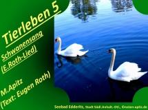 Tierleben 5 Schwanensang (E. Roth-Lied) – Eugen Roth-Lieder; Manfred Apitz (Text: Eugen Roth); Seebad Edderitz, Stadt Südliches Anhalt, Deutschland) Sparte: 20.+21. Jh. Konzert